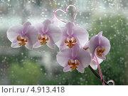Купить «Ветка розовой орхидеи на окне», эксклюзивное фото № 4913418, снято 30 июля 2013 г. (c) Svet / Фотобанк Лори