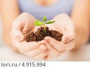 Зеленый росток в женских руках. Стоковое фото, фотограф Syda Productions / Фотобанк Лори