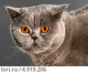Купить «Сердитый взгляд», фото № 4919206, снято 3 августа 2013 г. (c) Виктор Тараканов / Фотобанк Лори