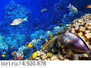 Купить «Кораллы и рыбы в Красном море. Египет, Африка.», фото № 4920878, снято 8 сентября 2012 г. (c) Vitas / Фотобанк Лори