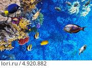 Купить «Кораллы и рыбы в Красном море. Египет, Африка.», фото № 4920882, снято 8 сентября 2012 г. (c) Vitas / Фотобанк Лори