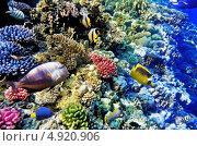 Купить «Кораллы и экзотические рыбы в рифах Красного моря», фото № 4920906, снято 8 сентября 2012 г. (c) Vitas / Фотобанк Лори