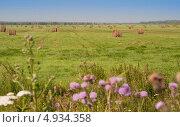 Скошенное поле в Тюменской области. Стоковое фото, фотограф Андрей Доможиров / Фотобанк Лори