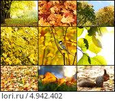 Коллаж из фотографий осенней природы. Стоковое фото, фотограф Иван Михайлов / Фотобанк Лори