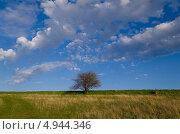 Одинокое дерево в поле. Стоковое фото, фотограф Искрен Петров / Фотобанк Лори