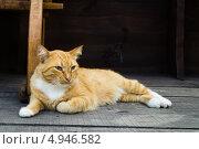 Рыжий кот лежит на деревянных досках. Стоковое фото, фотограф Анастасия Марисенкова / Фотобанк Лори