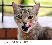 Кошка. Стоковое фото, фотограф Olga / Фотобанк Лори