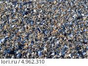 Мелкие ракушки и галька на берегу моря. Стоковое фото, фотограф Роман Негруца / Фотобанк Лори