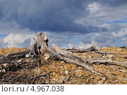 Купить «Грозовое облако над мертвым лесом», фото № 4967038, снято 14 августа 2013 г. (c) Валерий Александрович / Фотобанк Лори