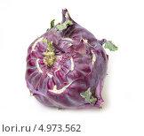 Купить «Капуста кольраби красная», фото № 4973562, снято 17 августа 2013 г. (c) Дудакова / Фотобанк Лори