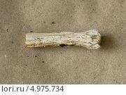 Срез ножки поганковидного мухомора. Стоковое фото, фотограф Анна Романова / Фотобанк Лори