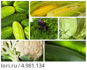 Купить «Урожай с дачных грядок. Овощной набор. Коллаж», фото № 4981134, снято 23 августа 2013 г. (c) Виктория Катьянова / Фотобанк Лори