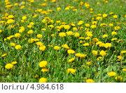 Весенний луг. Стоковое фото, фотограф Александр Палехов / Фотобанк Лори