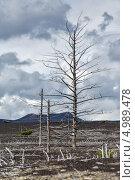 Купить «Мертвый лес, Большое трещинное Толбачинское извержение. Камчатка», фото № 4989478, снято 27 июля 2013 г. (c) А. А. Пирагис / Фотобанк Лори