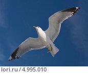 Купить «Чайка на фоне голубого неба», фото № 4995010, снято 27 июля 2013 г. (c) Александр Рощин / Фотобанк Лори