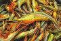 Купить «Дальневосточная полосатая креветка, сырая», фото № 4995182, снято 15 июня 2013 г. (c) Koshman Anastasiya / Фотобанк Лори