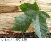 Кленовый лист на древесине. Стоковое фото, фотограф Никонович Светлана / Фотобанк Лори