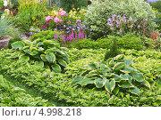 Купить «Клумба из хост в цветущем саду», эксклюзивное фото № 4998218, снято 25 августа 2013 г. (c) Евгений Мухортов / Фотобанк Лори