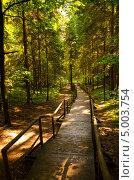Деревянные мостки в лесу. Стоковое фото, фотограф Sergejus Savickis / Фотобанк Лори