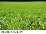 Купить «Зеленая газонная трава», фото № 5004794, снято 24 августа 2013 г. (c) Андрей Ганичев / Фотобанк Лори