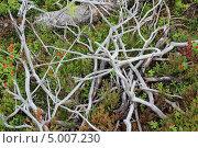 Лес , природа. Стоковое фото, фотограф Андрей Голяк / Фотобанк Лори