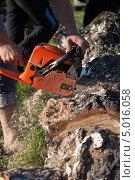 Мужчина пилит ствол дерева. Стоковое фото, фотограф Максим Савин / Фотобанк Лори