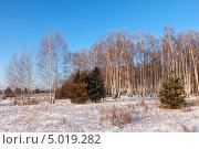 Купить «Зимний пейзаж с деревьями», фото № 5019282, снято 18 декабря 2012 г. (c) Яков Филимонов / Фотобанк Лори
