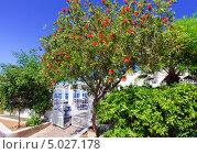 Цветущее дерево около входа на пляж (2010 год). Стоковое фото, фотограф Наталия Македа / Фотобанк Лори