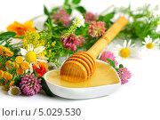 Мед и полевые цветы. Стоковое фото, фотограф Наталья Алексахина / Фотобанк Лори