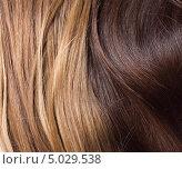 Натуральные русые и каштановые волосы. Стоковое фото, фотограф Наталья Алексахина / Фотобанк Лори