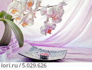 Купить «Натюрморт с орхидеями и свечей на сиреневом фоне», фото № 5029626, снято 12 августа 2013 г. (c) Татьяна Назмутдинова / Фотобанк Лори