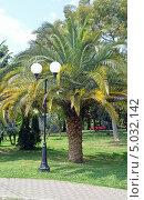 Купить «Финиковая пальма и фонарь в парке, Сочи», фото № 5032142, снято 20 мая 2013 г. (c) Александр Замараев / Фотобанк Лори