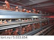 Купить «Птицефабрика», фото № 5033654, снято 28 октября 2011 г. (c) Василий Вишневский / Фотобанк Лори