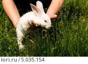 Крольчонка выпускают в траву. Стоковое фото, фотограф Александра Задохина / Фотобанк Лори