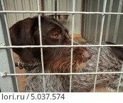 Запертая собака в клетке, приют для животных. Стоковое фото, фотограф Роман Петрушин / Фотобанк Лори