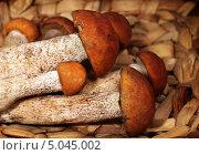 Купить «Грибы подосиновики в корзине», фото № 5045002, снято 9 октября 2012 г. (c) ElenArt / Фотобанк Лори