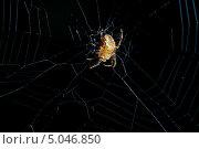 Паук на паутине. Стоковое фото, фотограф Александр Tолстой / Фотобанк Лори