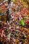 Кустики голубики, фото № 5050678, снято 12 сентября 2013 г. (c) Владимир Мельников / Фотобанк Лори
