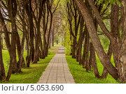 Дорожка. Стоковое фото, фотограф Алексей Анфёров / Фотобанк Лори