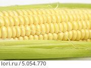 Купить «Кукуруза», эксклюзивное фото № 5054770, снято 1 сентября 2013 г. (c) Яна Королёва / Фотобанк Лори