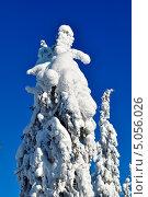 Деревья в снегу. Стоковое фото, фотограф Алексей Леонтьев / Фотобанк Лори