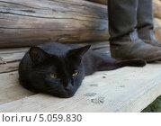 Купить «Черный кот лежит рядом с кирзовыми сапогами», фото № 5059830, снято 8 августа 2013 г. (c) Любовь Назарова / Фотобанк Лори