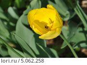 Желтый цветок с сюрпризом. Стоковое фото, фотограф Просенкова Наталья / Фотобанк Лори
