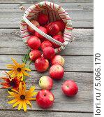 """Купить «Урожай яблок """"Слава победителям"""" на деревянном столе», фото № 5066170, снято 23 августа 2013 г. (c) Олеся Сарычева / Фотобанк Лори"""