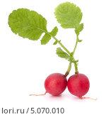 Купить «Редис с зелеными листьями», фото № 5070010, снято 17 апреля 2012 г. (c) Natalja Stotika / Фотобанк Лори