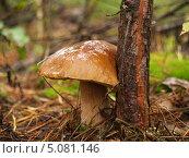 Белый гриб в осеннем лесу. Стоковое фото, фотограф Артур Буйбаров / Фотобанк Лори