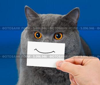 Купить «Кот с улыбкой, нарисованной на бумаге», фото № 5096946, снято 25 октября 2011 г. (c) Андрей Кузьмин / Фотобанк Лори