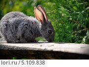 Кролик. Стоковое фото, фотограф Иван Иванов / Фотобанк Лори