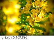 Пчела и цветок. Стоковое фото, фотограф Иван Иванов / Фотобанк Лори