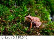 Лягушонок. Стоковое фото, фотограф Игнатьев Алексей / Фотобанк Лори